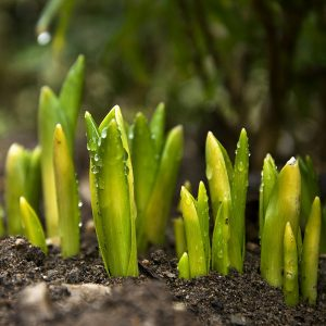Latest news - Seedlings sprouting, representing the new growth of the Committee